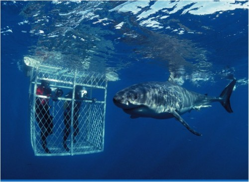 Adventure - Great White Cage Diving, South Africa